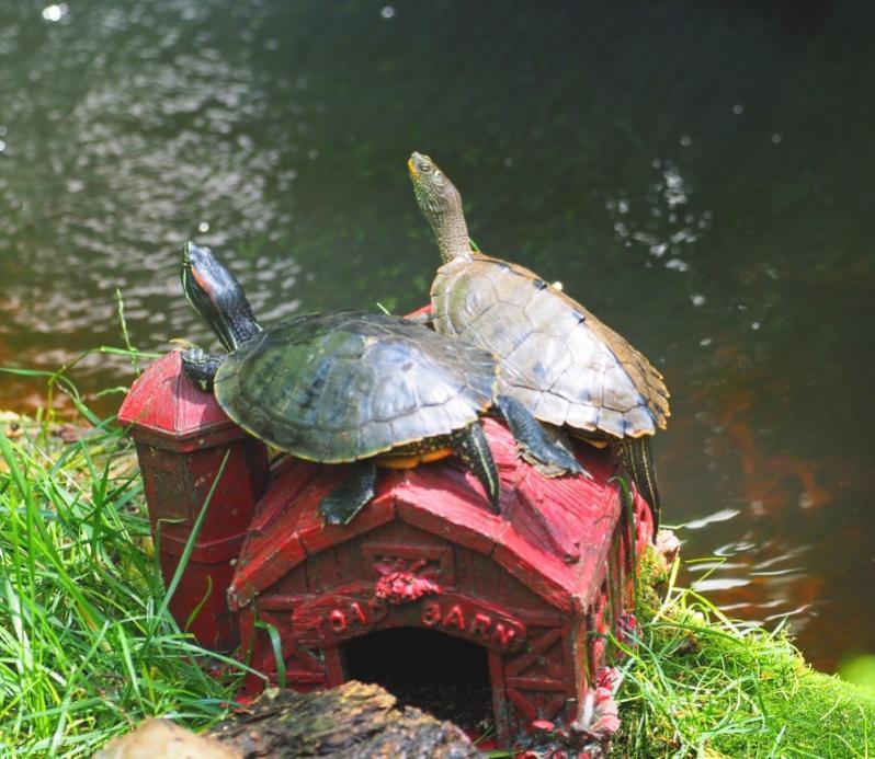Name:  turtleyc.jpg Views: 32 Size:  83.3 KB