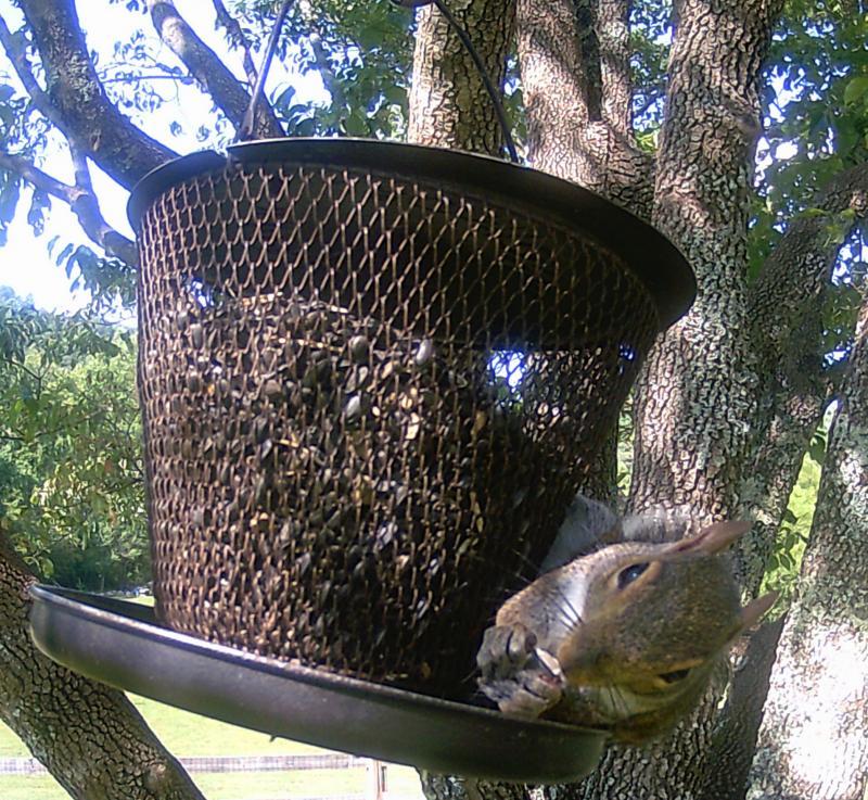 Name:  squirrell.jpg Views: 41 Size:  149.0 KB