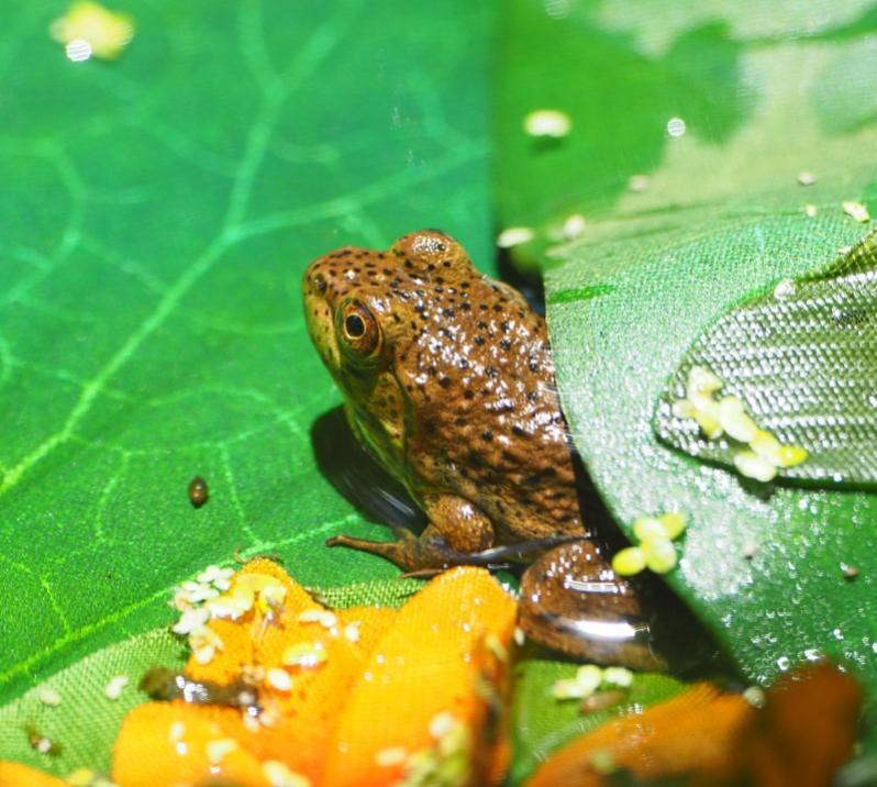 Name:  frog2yc.jpg Views: 41 Size:  81.4 KB