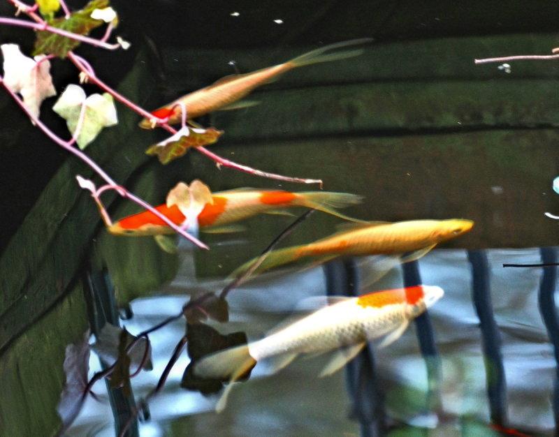 Name:  fish.jpg Views: 57 Size:  92.1 KB