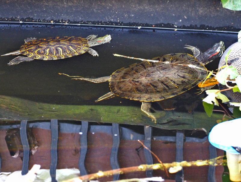 Name:  turtle.jpg Views: 51 Size:  122.0 KB