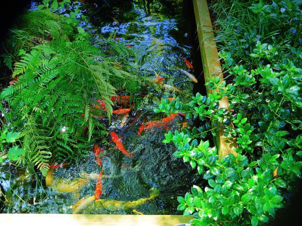 Name:  fish.jpg Views: 8 Size:  108.8 KB
