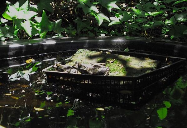 Name:  frogs.jpg Views: 8 Size:  94.9 KB