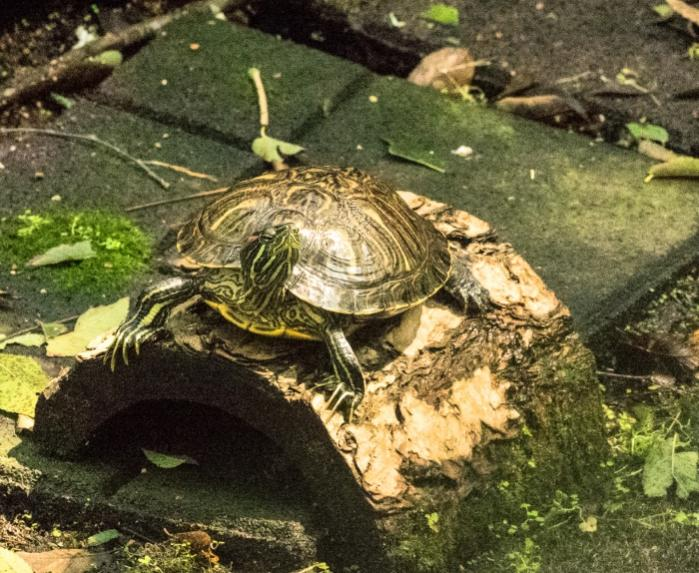 Name:  turtle (1 of 1)-4700.jpg Views: 634 Size:  87.8 KB