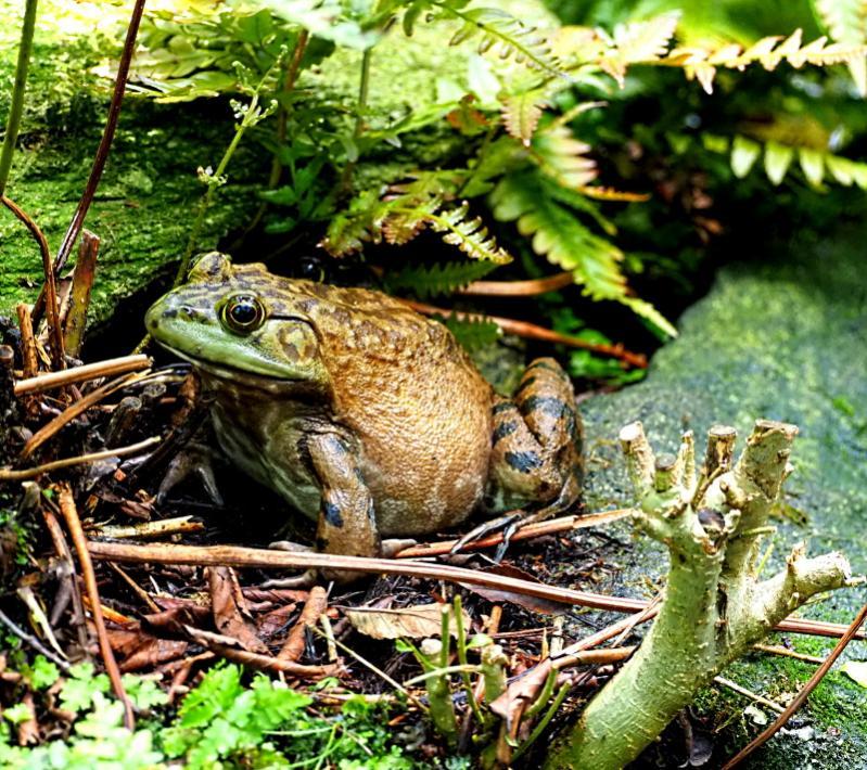 Name:  frogg.jpg Views: 11 Size:  144.6 KB