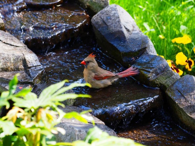 Name:  cardinal.jpg Views: 17 Size:  89.7 KB