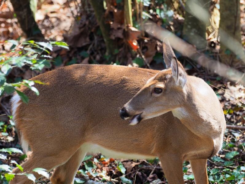 Name:  deer799.jpg Views: 46 Size:  84.4 KB