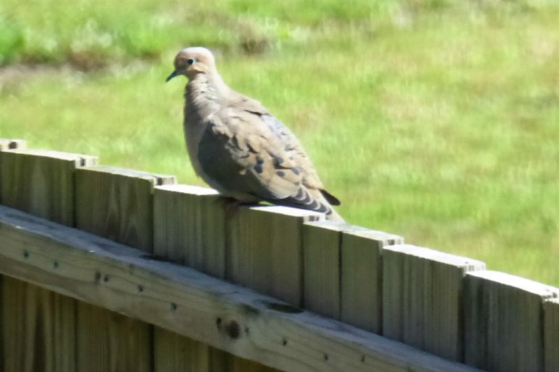 Name:  dove.jpg Views: 12 Size:  40.1 KB