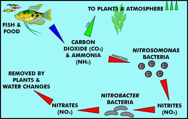 Name:  nitrogen-cycle.jpg Views: 5 Size:  39.9 KB