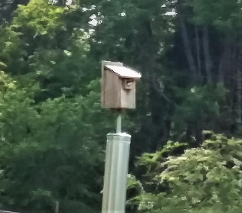 Name:  tree swallow box.jpg Views: 15 Size:  54.9 KB