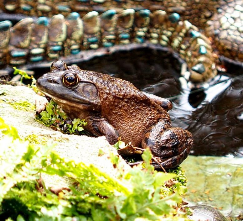 Name:  frog777.jpg Views: 104 Size:  111.8 KB