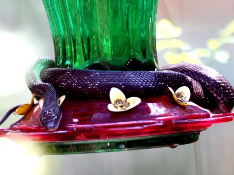 Name:  snake777.jpg Views: 125 Size:  54.6 KB