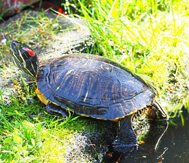 Name:  turtle1tp.jpg Views: 124 Size:  159.2 KB